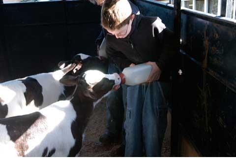 photo courtesy of Liberty Hill Farm