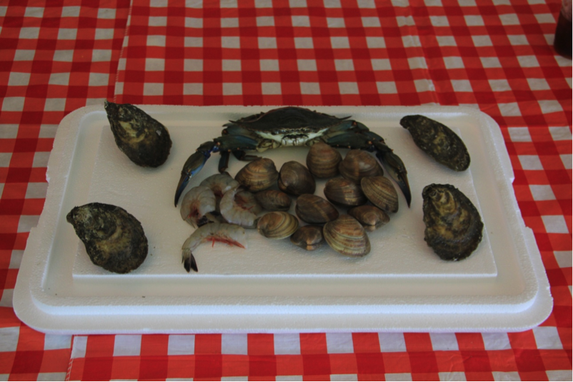 shellfish