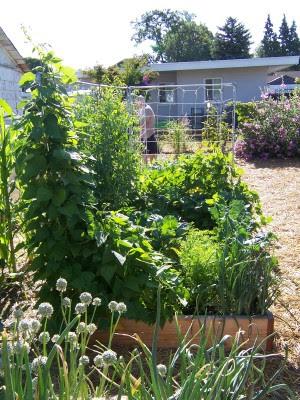 garden 6-26-07